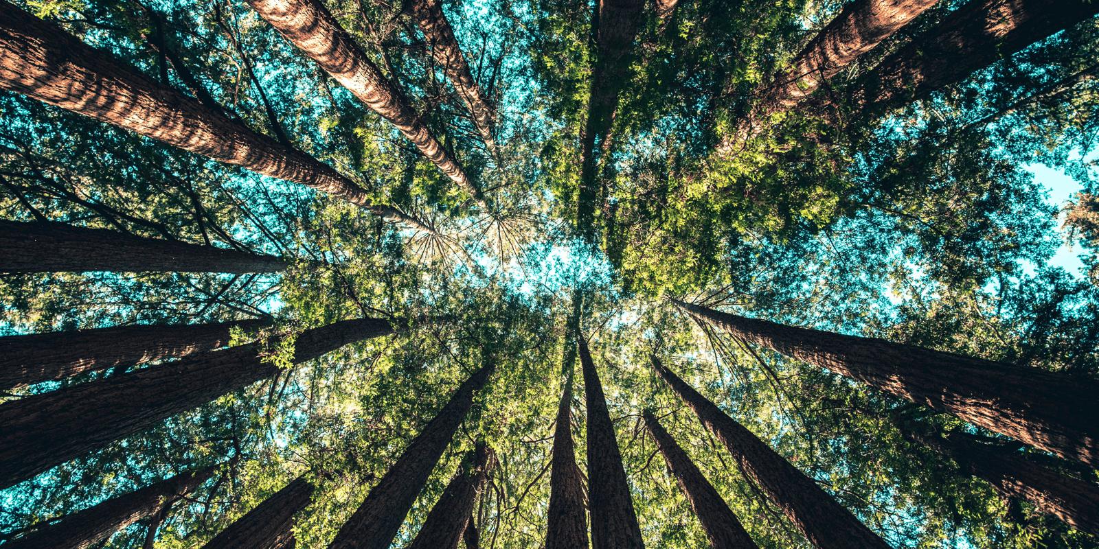 Duurzameprinters.com werkt samen met Trees for All voor een groenere wereld!